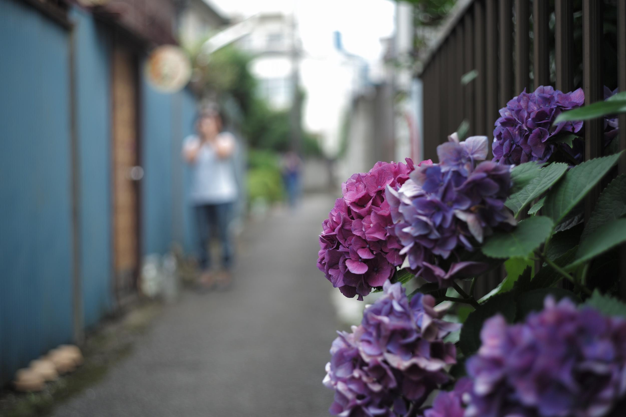 012375_18_leica_copy_fujinon_50_2.8_l